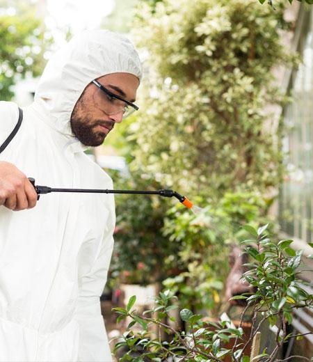 Уничтожение комаров департаментом «ЭкоСЭС»